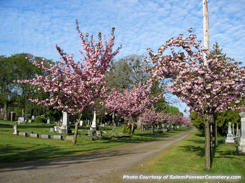 Spring Time in the Salem Pioneer Cemetery